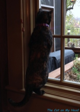 Astrid watching a squirrel from the kitchen window.