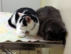 Giulietta wedged herself against the wall and hid her face when Lisbeth returned to the room. While they waited for their nails to be trimmed, Lisbeth just kept pushing Giulietta further and further into the wall.