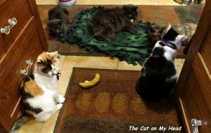 L to R: Lily Olivia, Fiona, Giulietta, Calista and Lisbeth with the nanner and blankie from Allie.