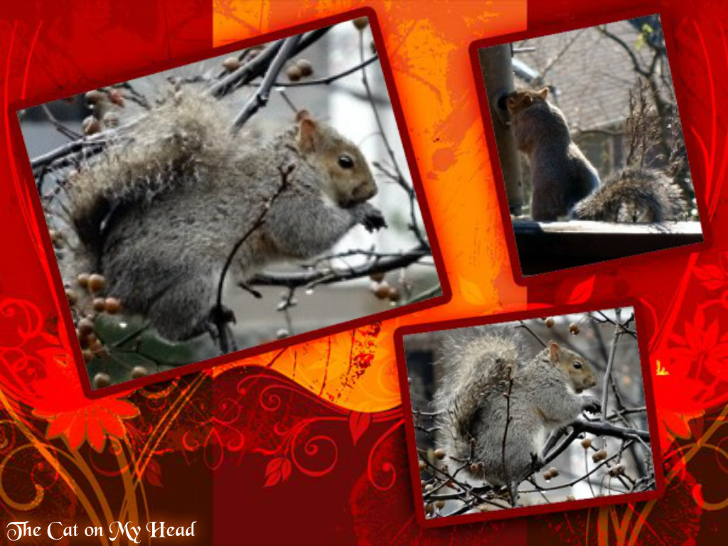 squirrelcollage