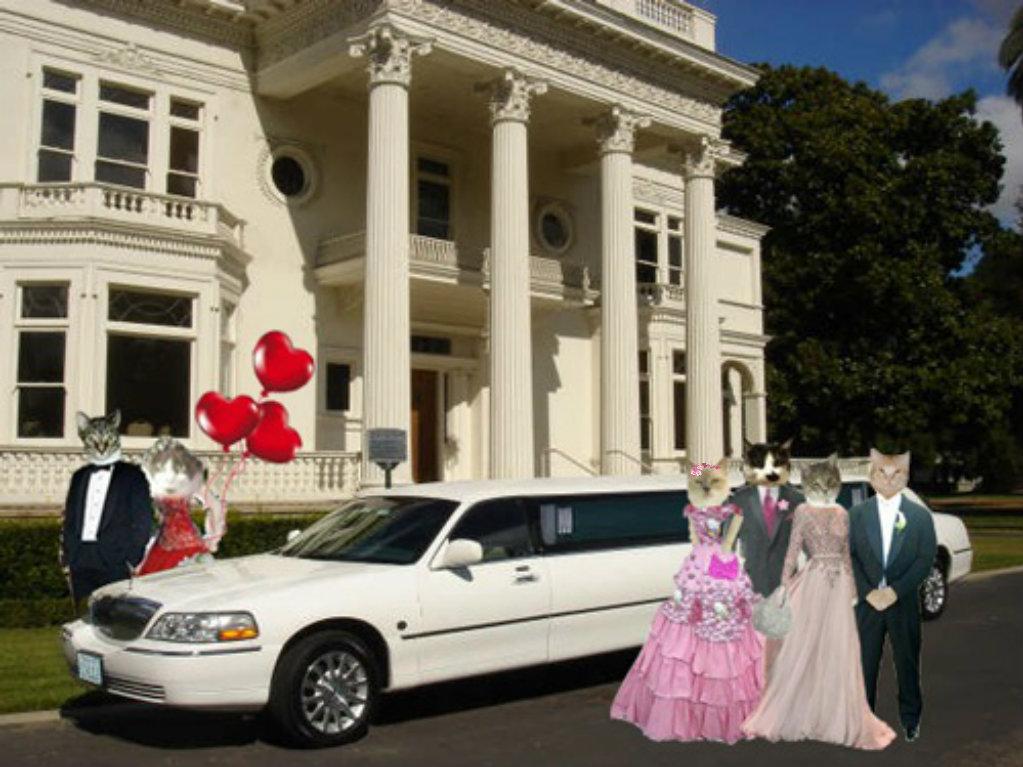 Raz & Madi (Queen of Hearts Dance hostess), Allie & Mauricio, Gracie & Tubby