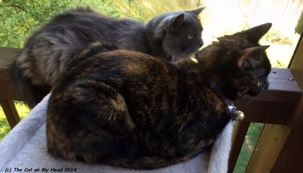 Giulietta and Astrid keeping their eyes on the bird feeder.