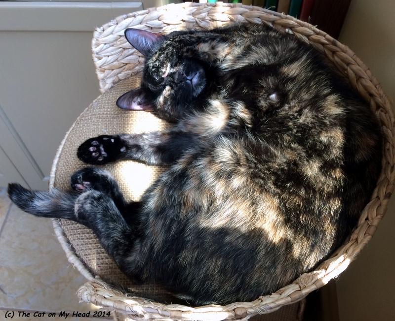 Astrid Easy Asleep