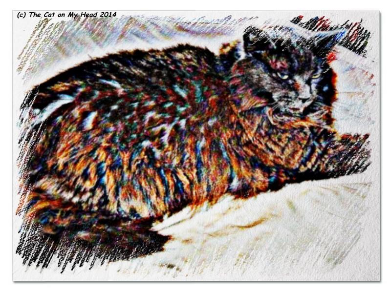 Giulietta Crayoned Floofiness