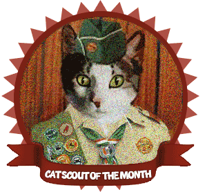 cat-scout-of-the-month-CHARLES