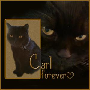 Carl-Forever