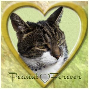 Peanut-Forever