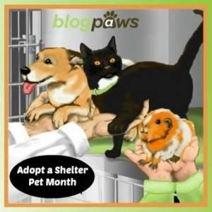 adopt-a-shelter-pet-month