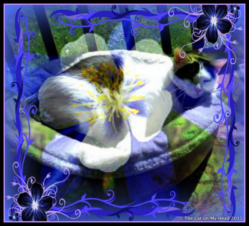 LISBETH'S BLUE PERIOD