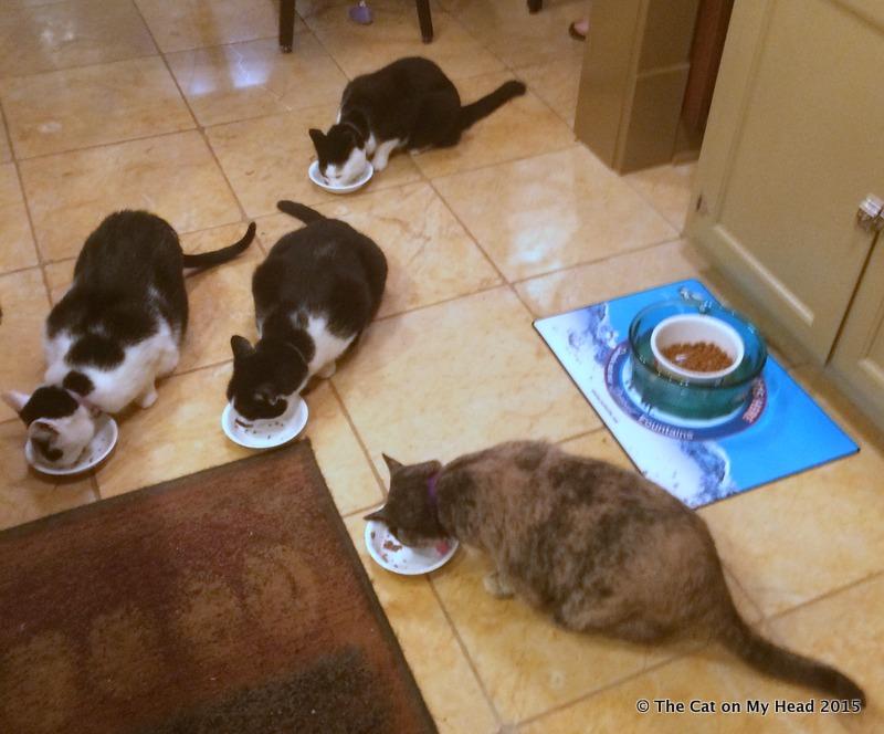 Four on the Flour