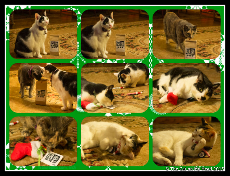 Stark Raving Cat Christmas