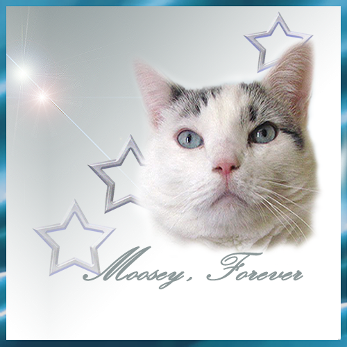 Moosey-Forever