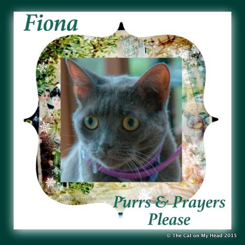 Purs and Prayers. Fiona needs purrs  and prayers.