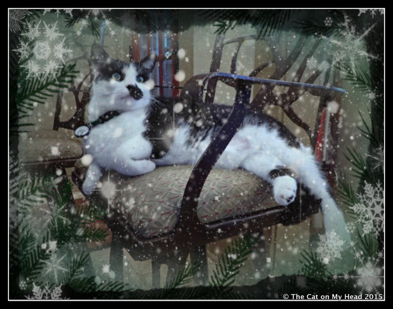 Wintery Caturday Art