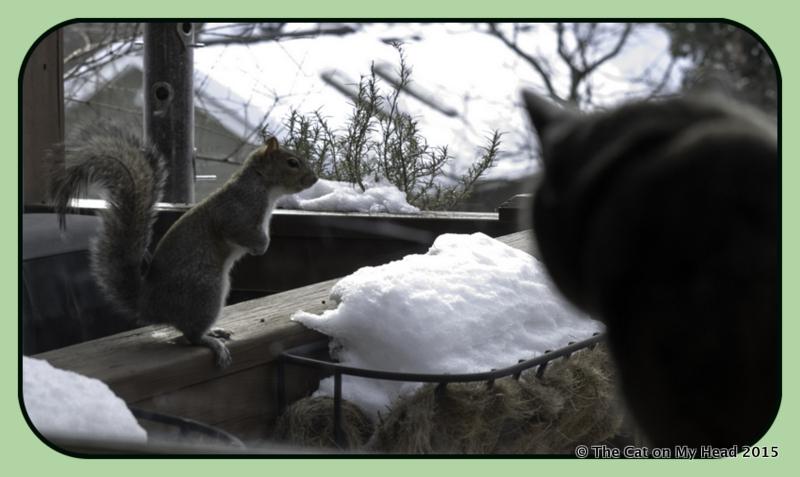 C.J. wins stare down contest with squirrel
