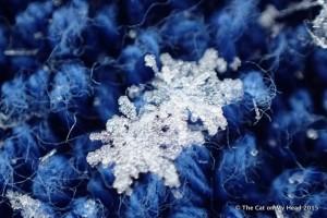 Snow day snowflakes