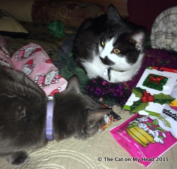 Mau & Fiona and Gifts