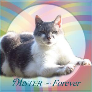 Mister-FOREVER
