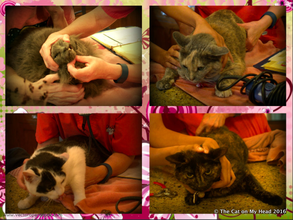 Annual Kitties Blue round-up collage.