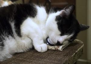 sleeping Mau