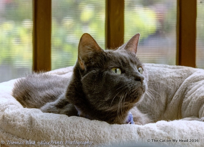 Fiona on the catio frowning at the birds.