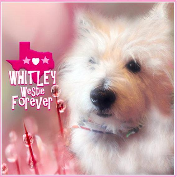 Remembering Whitley Westie