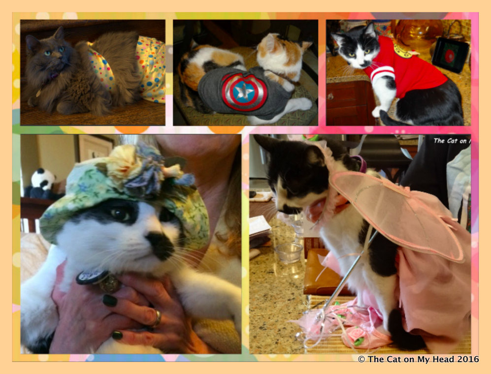Kitties Blue Dress Up for Whitley Day