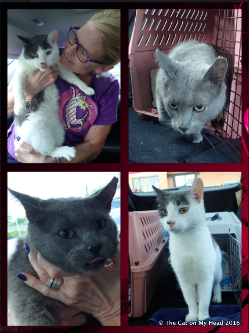 Transport collage of FIV+ Ricky Bobby and Bruno Mars