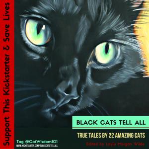 Black Cat Kickstarter Campaign