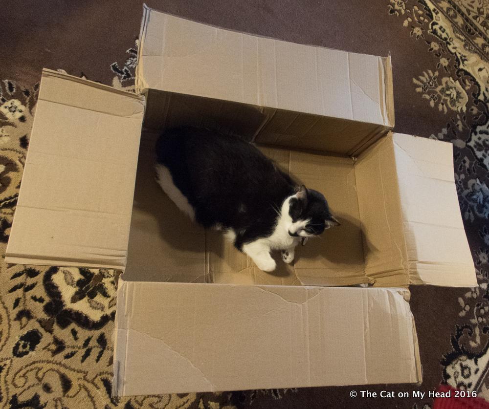 Mauricio has claimed the cardboard box for International Box Day.