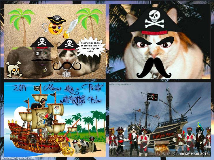 Meowin' Like Pirates 2016