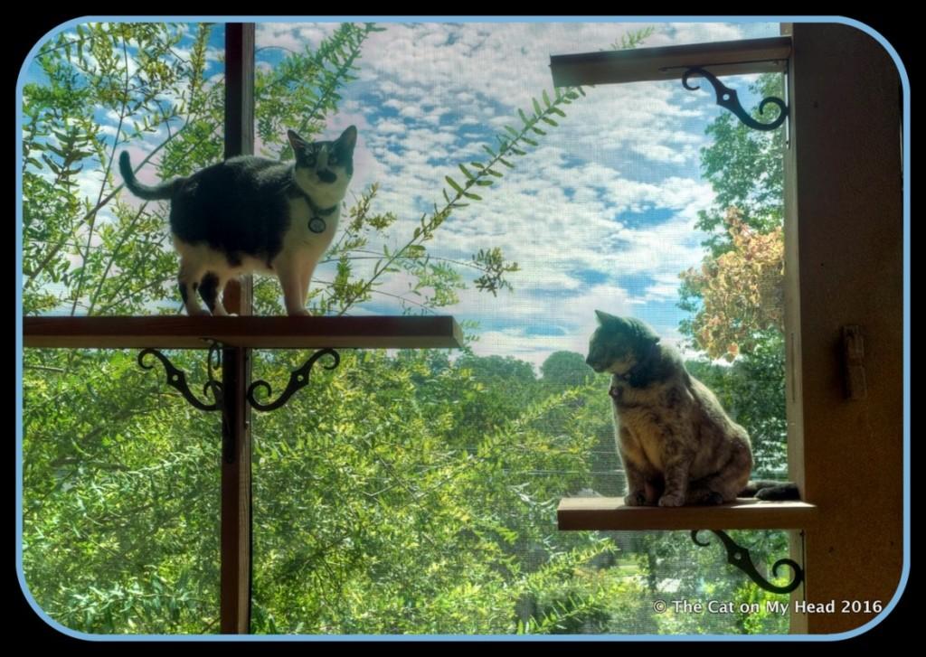 catio and perches