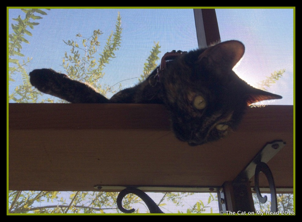 Life on the catio