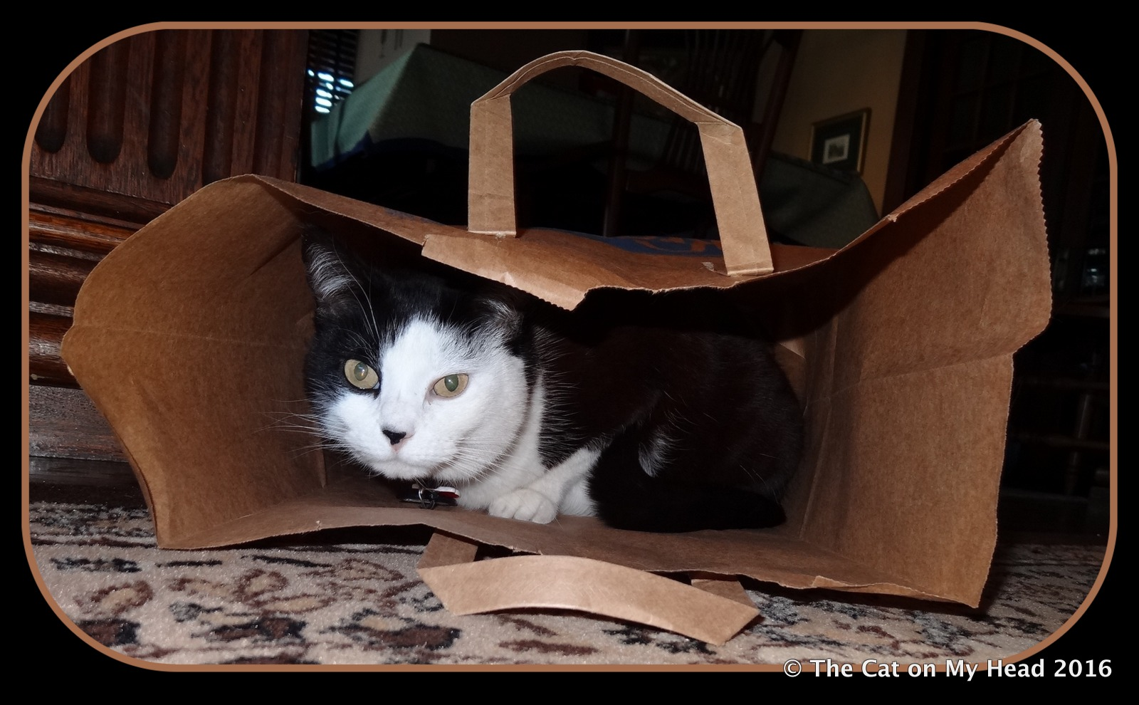 Misty May's in the bag.