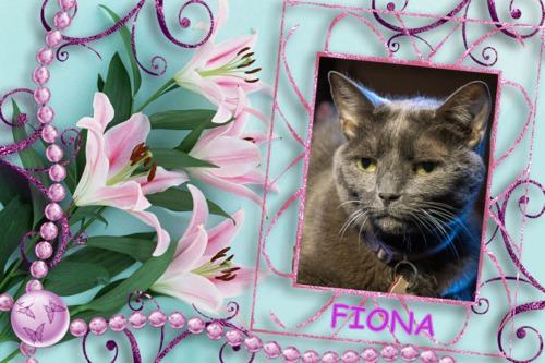 farewell Fiona