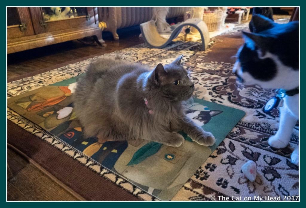 hey you get off my mat