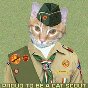 Cat Scout Cooper Murphy Blue
