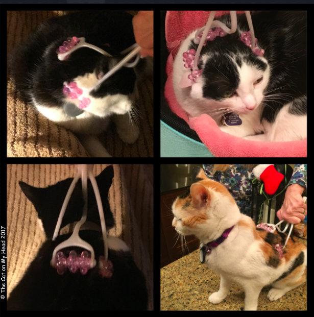 Kooky Kittens Review