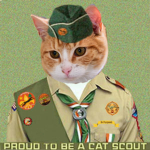Cat Scout Teddy Kimmell