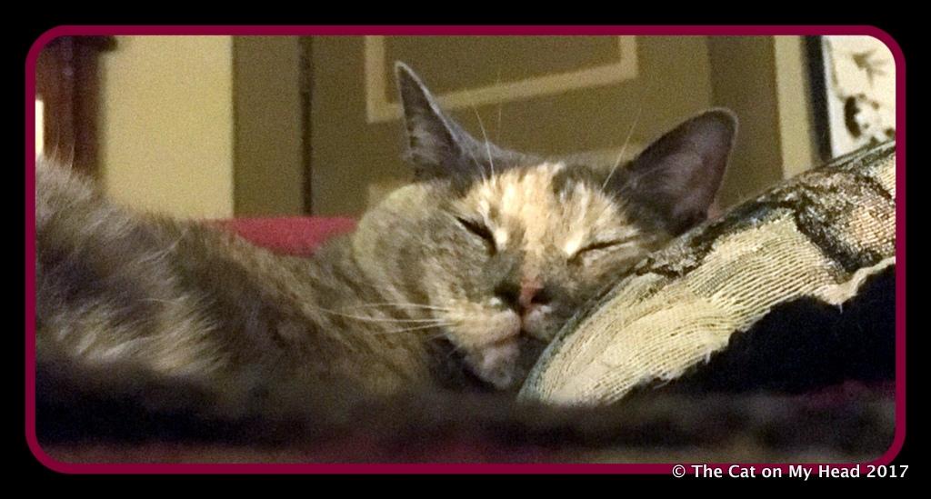 Calista Jo dreaming of treaties!