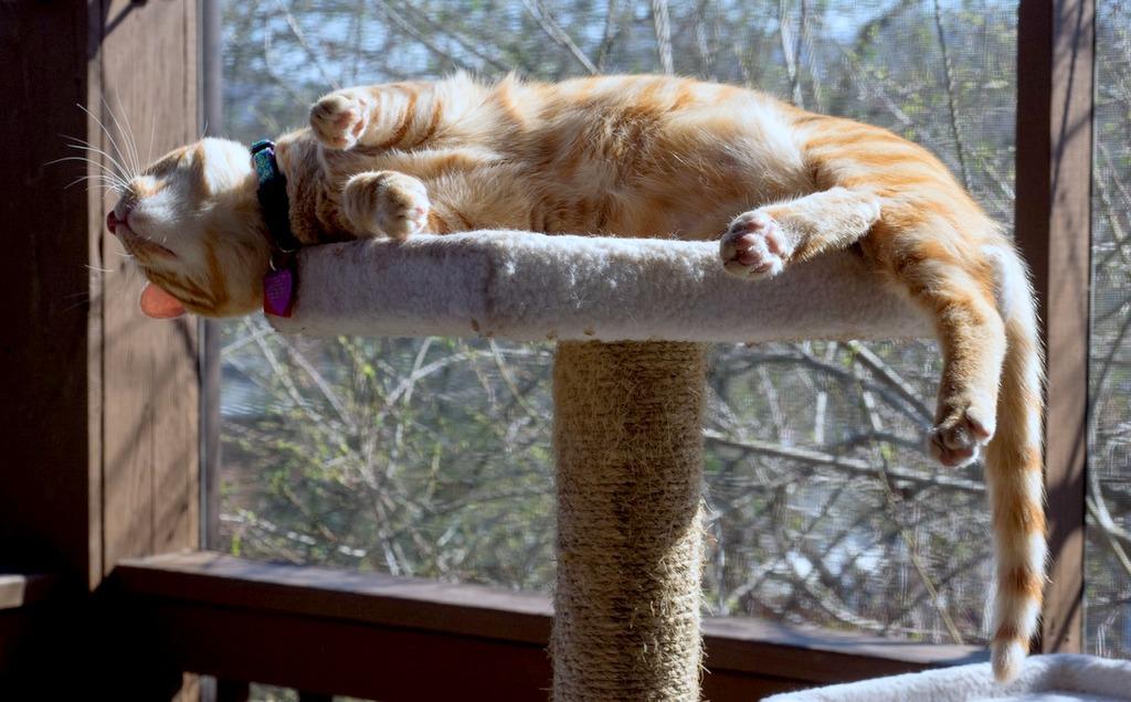 Cooper Murphy nap