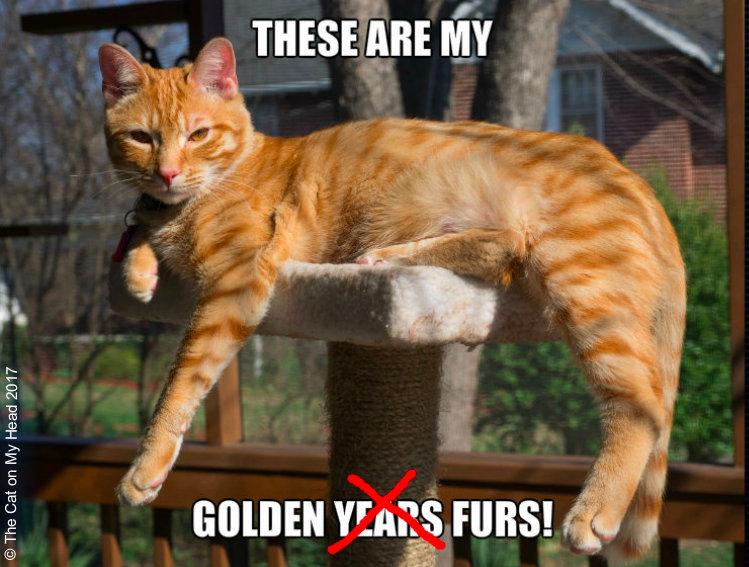 Golden years or golden furs?