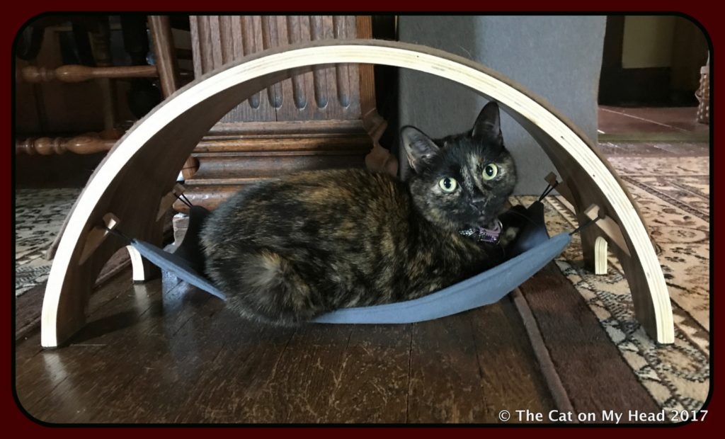 Astrid, is hangin' out in the little hammock of the QuickSnap Replaceable Cat Scratcher by Feline Innovations.