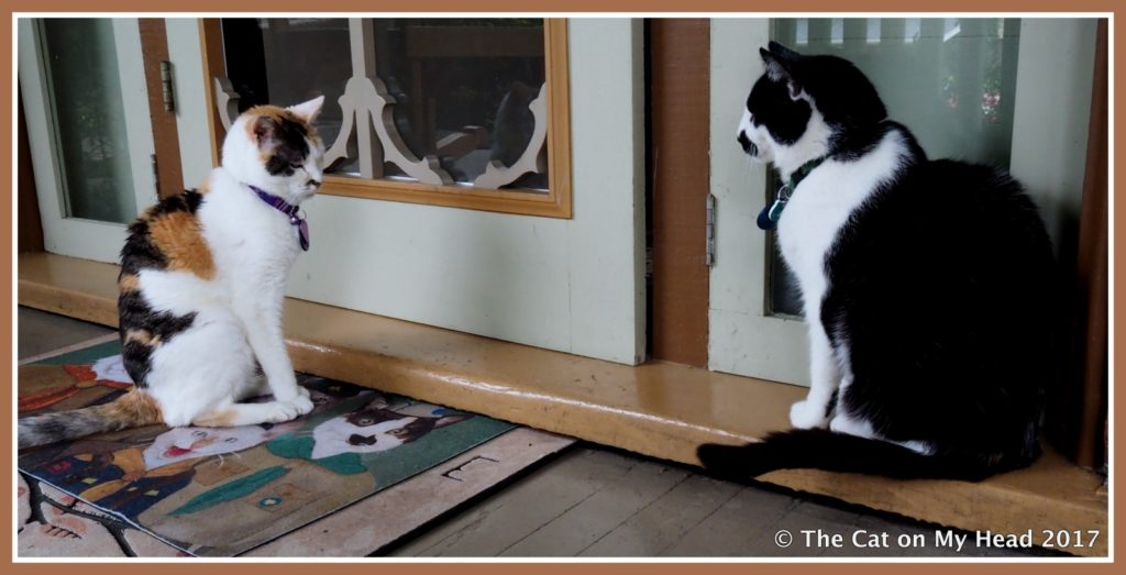 Mau tells Lily to get off his Cat Scouts doormat.