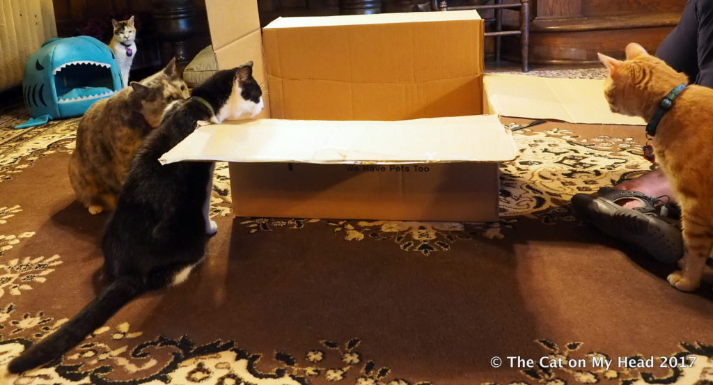 C.J., Mau and Cooper Murphy investigate box while Lily looks on.
