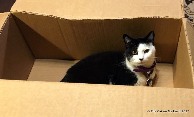 "Misty May: ""This box is all mine...finally."""