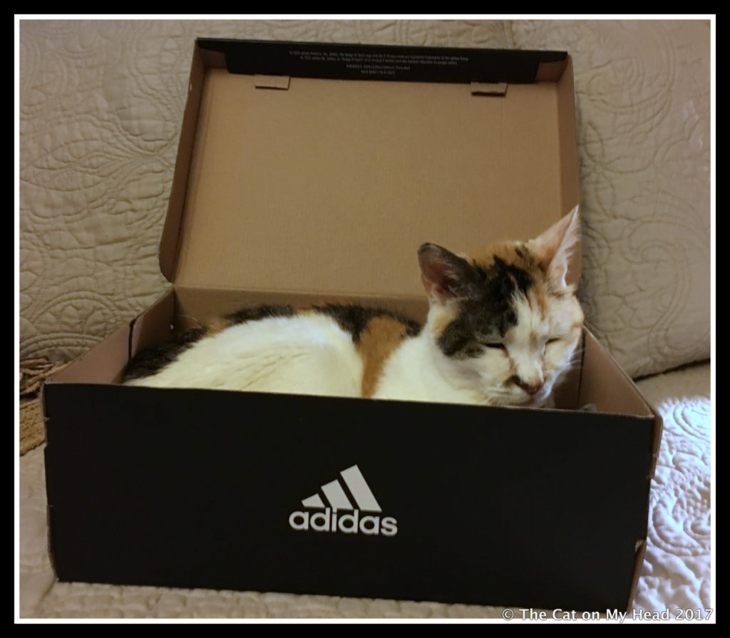 Senior citizen cat Lily Olivia prefers to snooze in this box.