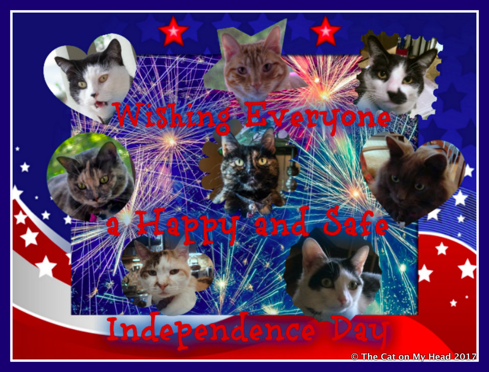 Kitties Blue celebrate Independence Day.