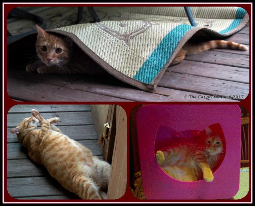 Cooper Murphy is a goofy cat.
