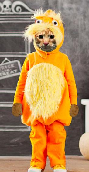 Cooper Murphy in Lorax costume at Cat Scouts.